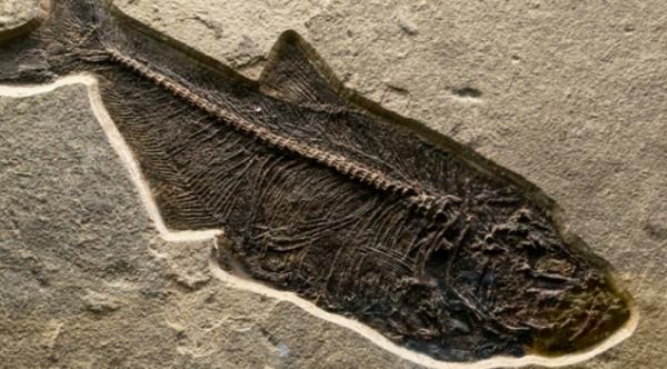 贵州发现史前鱼类:名字霸气长相奇丑,看起来应该就不好吃