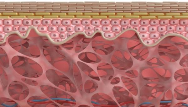洁癖还沾沾自喜?研究:皮肤细菌在伤口愈合和毛囊新生中具有积极作用