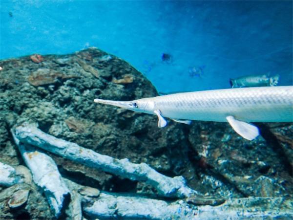 神奇!人类的眼脑连接在4.5亿年前就存在了,竟是由鱼类进化而来