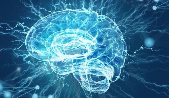 知识不是万能的!上大学能扩大脑容量,但无法减缓大脑萎缩速度