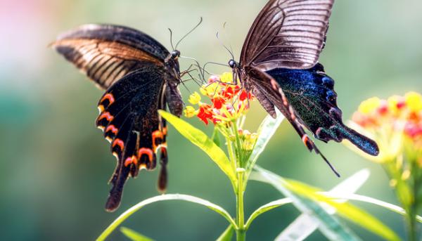 带上女朋友去看!云南蝴蝶谷将有1.5亿只蝴蝶大爆发,首批成蝶就在520