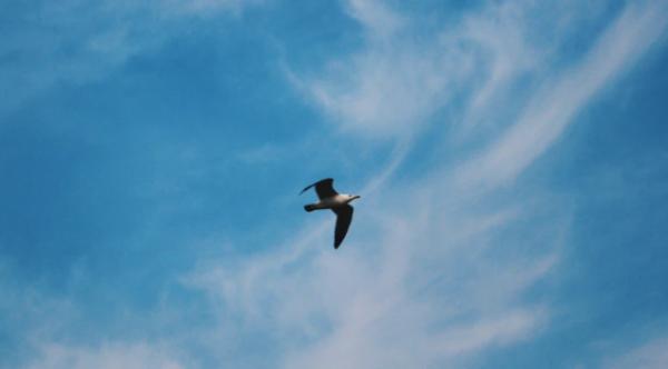 """如果没有希望,那就去远方吧!苍蝇都能飞越""""数千公里""""找希望,你也一定可以"""