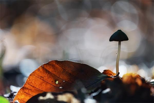 预防太空垃圾,从用蘑菇造卫星开始做起