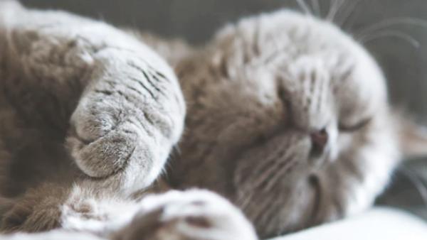 研究显示午睡太长增加死亡风险,老板:太好了!又可以缩短午休时间了