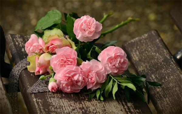 玫瑰上的刺,是她的骑士