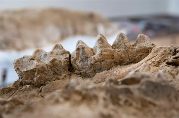 意外之喜!护林员意外发现惊人化石群,为加州有史以来最重要遗址之一