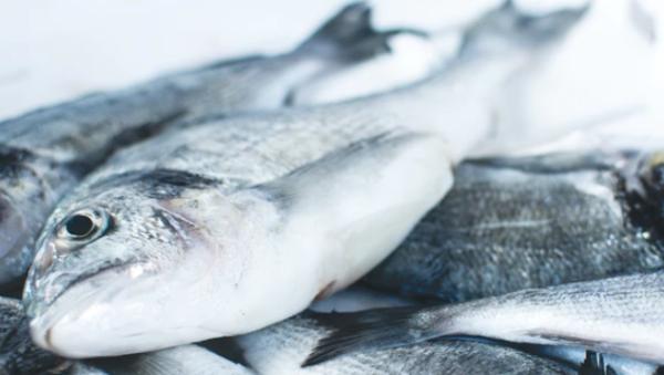 淡水海水都能活!气候变化导致生物灭绝,但这种鱼却能轻易活下来