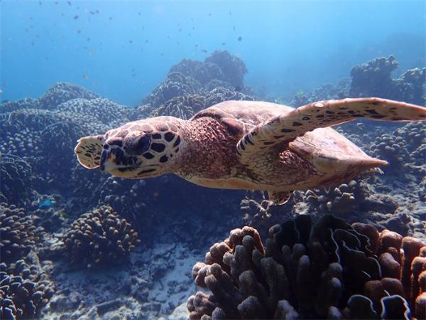 影响繁殖!科学家首次在海龟肌肉中发现塑料:每克肌肉含6-100毫微克