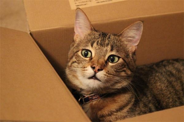 猫与盒子不得不说的天然吸引力