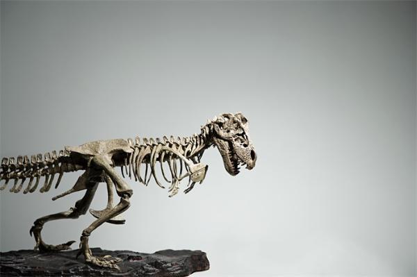 """""""超凡""""夜视能力!距今6500万年的一种恐龙,完全漆黑中也能轻松狩猎"""