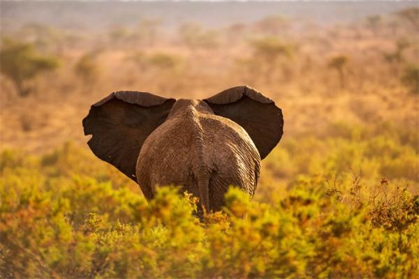 震惊!曾经称霸西西里岛的一种大象,35万年里身高减半体重下降近85%