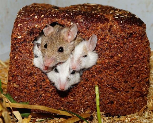 老鼠精子在太空存活了6年,并成功诞下健康后代,为人类殖民外星铺平道路