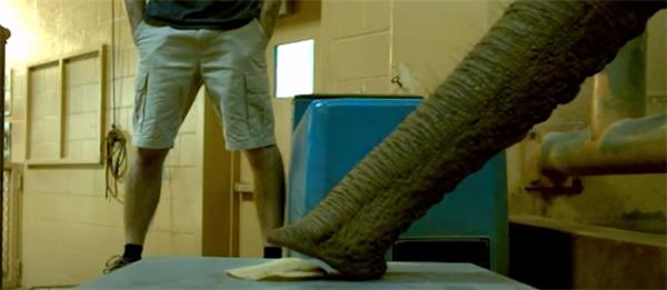 云南象群是如何靠象鼻横扫4吨美味的?