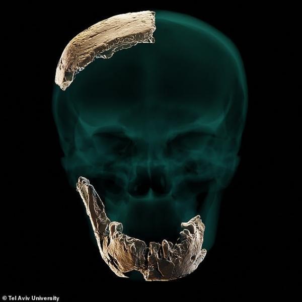 以色列发现一种未知古人类:或为20万年前失踪人口,将揭开人类进化史谜题