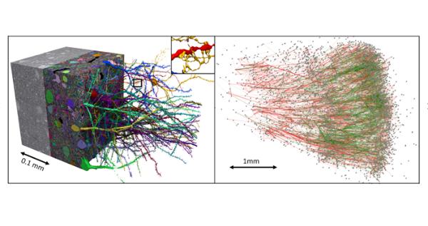震撼!谷歌哈佛联合发布有史以来最全面的3D可视化人脑图像,错综复杂令人惊叹
