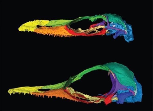 推翻!科学家在缅甸琥珀中发现奇怪蜥蜴,此前被错误归类为世界上最小的恐龙