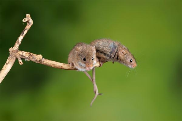 太难了!广东70只老鼠被拉去做核酸检测,结果出来了……