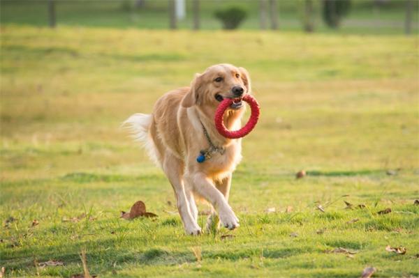 惊人的遗传天性!狗天生善于与人交流,轻松读懂手势还能秒回主人眼神