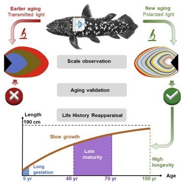 """有种""""活化石""""鱼寿命可长达100年!50岁才成年,孕期就需要5年"""