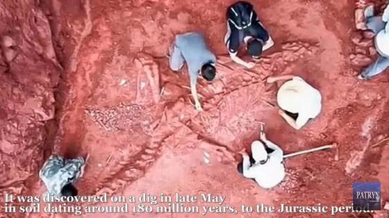 中国发现巨型恐龙骨架:全长预计8米,可追溯至1.8亿年前侏罗纪
