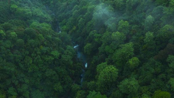 地球之肺?一项令人惊讶的研究显示:世界上最大的雨林正在加剧全球变暖