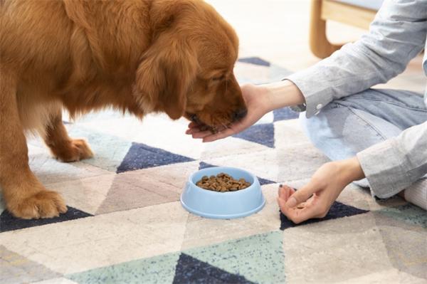 研究:家犬可能不会回报主人的善行,谁投食了狗子可能根本没放心上