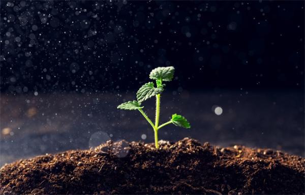 解决吃的!科学家在国际空间站上发现多种细菌,或有助于在火星上种植作物