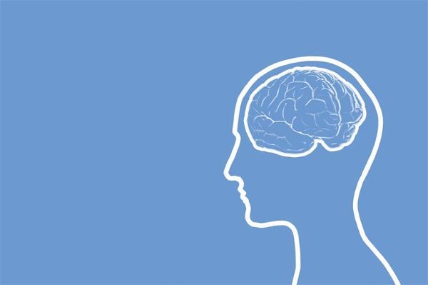 小脑研究的里程碑!科学家首次成功绘制出人类小脑发育的分子图谱