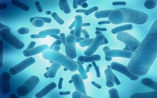 研究表明:肠道真菌也能影响人体健康,过度积累导致炎症性肠病