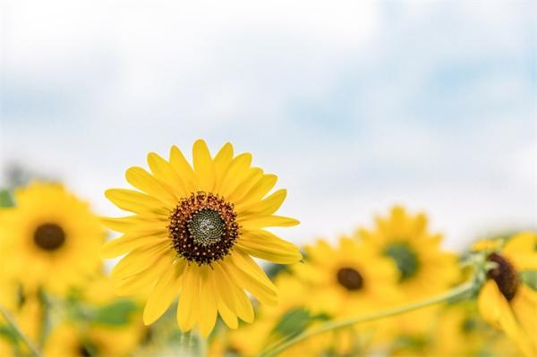 从微笑的向日葵到愤怒的辣椒:科学家揭示了为什么我们的大脑会对无生命物体的面孔做出情绪反应