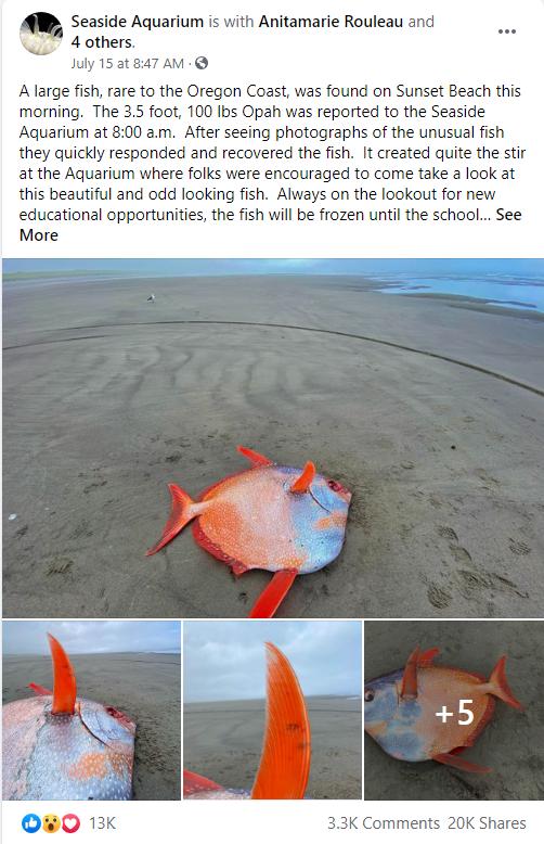 海滩上冲上来一条100磅的鱼,科学家都傻眼了
