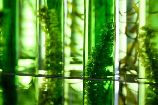 活久见!科学家首次发现具有三种性别的藻类:雄性、雌性、雌雄同体