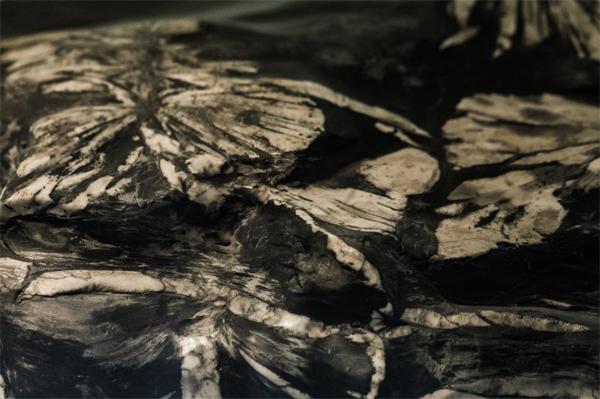 这枚一亿年前、长相奇特的蛋化石,究竟是谁下的蛋?