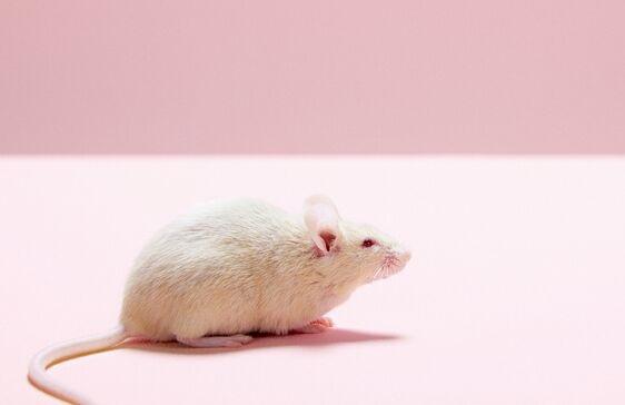 美国一男子感染鼠疫一个月却浑然不知,曾触摸过一只死老鼠