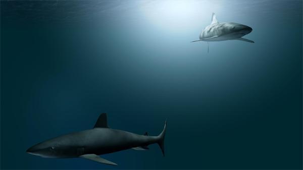 """奇迹!鲨鱼被发现首例""""无性繁殖""""案例,雌性母亲不受精就怀上宝宝"""