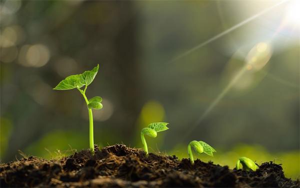 植物如何感知温度?重磅研究发现植物热感受器!