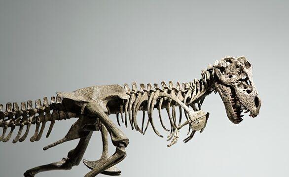 年度沙雕新闻!成都理工设恐龙养育专业系?招生办:恐龙都没了还养育啥