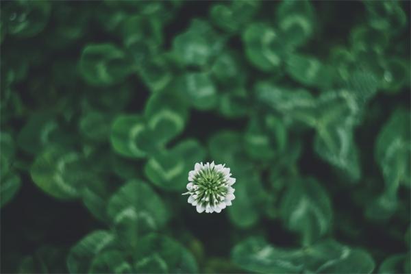 """肉食""""秘密杀手""""!科学家首次发现一种小白花可以用黏稠的茎来捕捉昆虫"""