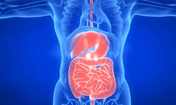 """研究:你肠道中的""""第二大脑""""可能比大脑进化得早,数千个神经元相互沟通"""