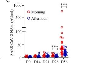 新冠疫苗接种时间有讲究!中山大学重磅发现:早上接种能产生更强的免疫反应