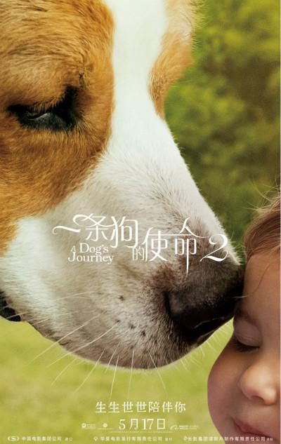 治愈佳作《一条狗的使命2》曝预告 定档5.17同步北美上映