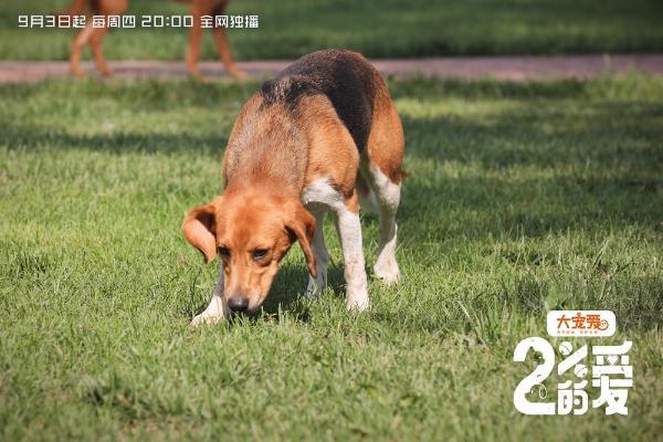 《百分之二的爱》萌趣治愈开播 用爱守护流浪动物