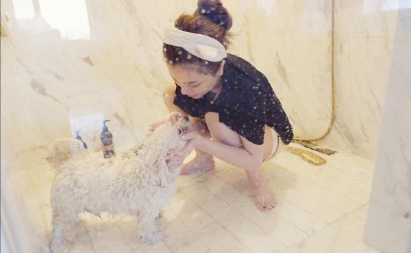 田歌帮助丢失的宠物成功回家 人们真的厌倦了说好话