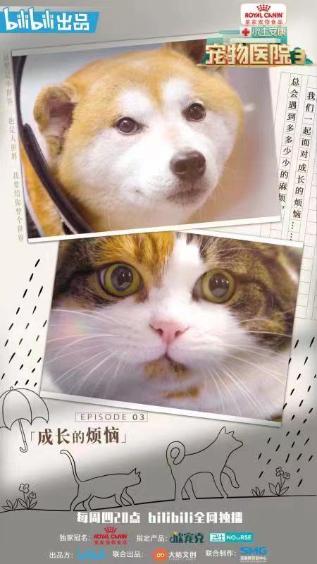 甜蜜而复杂的烦恼《宠物医院3》告诉你养宠物可以经历的成长烦恼
