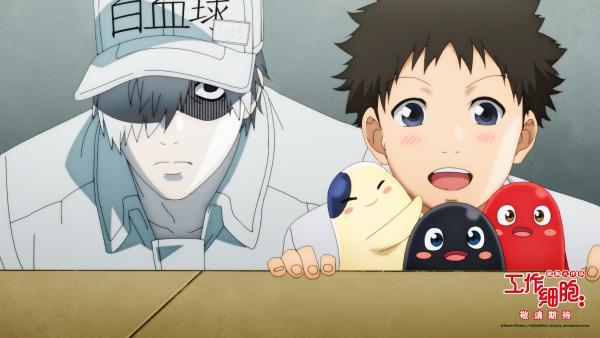 日本爆炸动画《工作细胞》电影版确认介绍