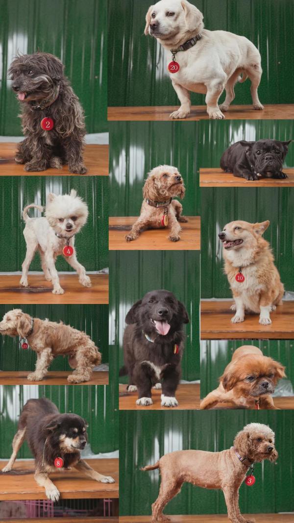 疯狂小狗X LIIIIIT爱它公益音乐节:为它发声,为它安家