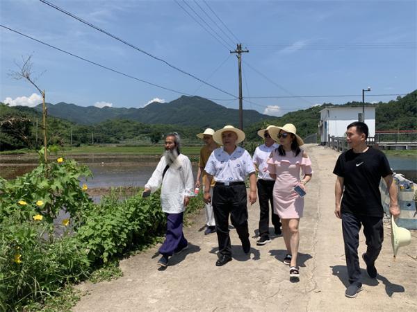 """影视剧《袁隆平》剧组采风""""爷爷的水稻田"""""""