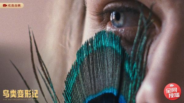 《鸟类变形记》欢喜首映独家上线,隐秘的至亲之情,温暖的家族之歌