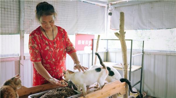 """薇娅viya为流浪动物基地捐赠,帮""""毛孩子们""""建一个温暖的家"""