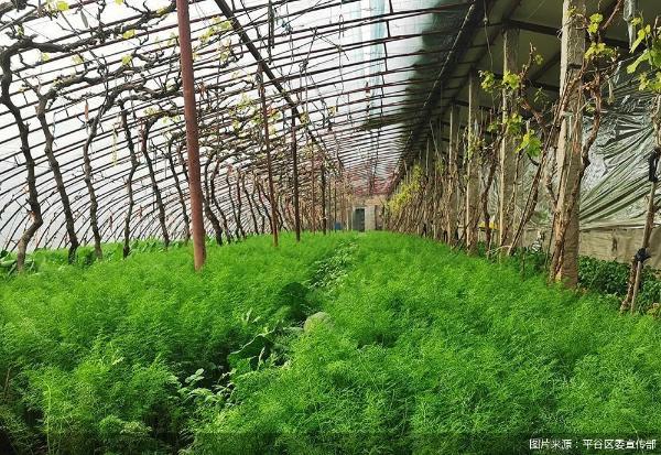 北京平谷麻坊提供新年蔬菜